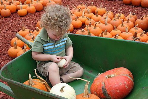 Pumpkin patch 061