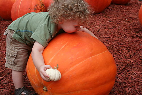 Pumpkin patch 094