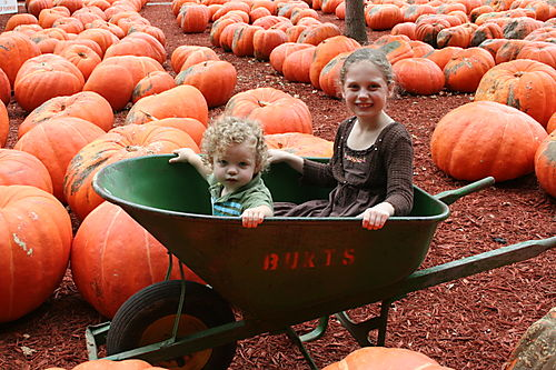 Pumpkin patch 026