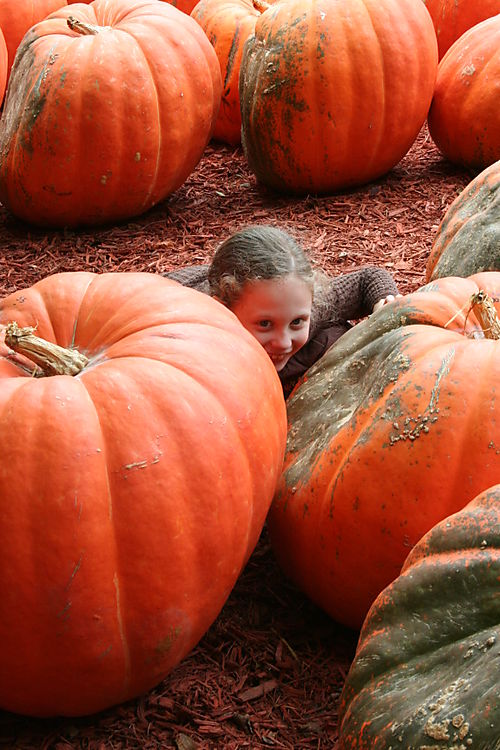 Pumpkin patch 039