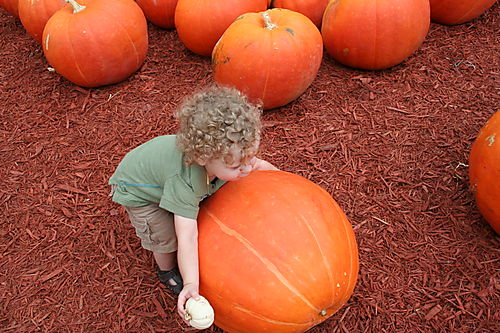 Pumpkin patch 083