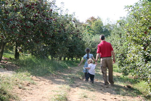 Apple picking 061