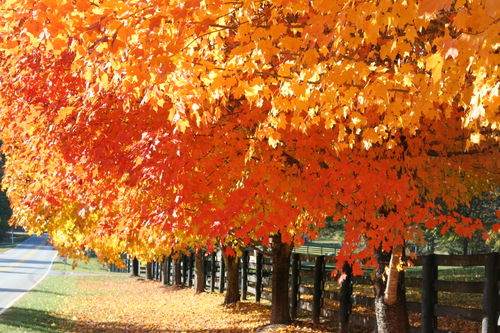 Fall drive 023