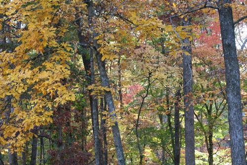 Fall drive 028