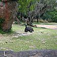 Kilimanjaro Safari - Ostrich