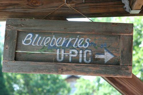 Blueberries 021