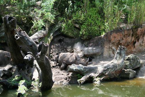 Kilimanjaro Safari - Black Rhino