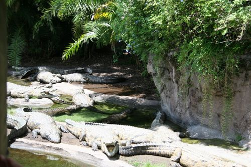 Kilimanjaro Safari - Crocodiles