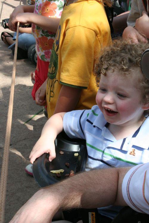 Enjoying Mickey's Jammin' Jungle Parade