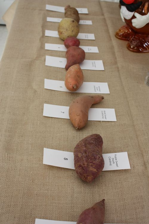 Nine Types of Potatoes
