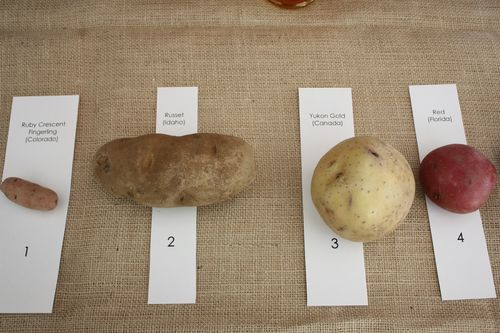 Ruby Crescent Fingerling Potato, Russet Potato, Yukon Gold Potato, & Red Potato