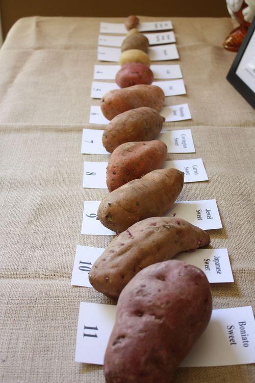 11 Types of Potatoes