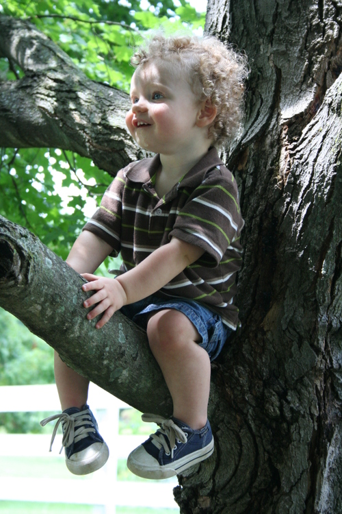 Isaac in tree