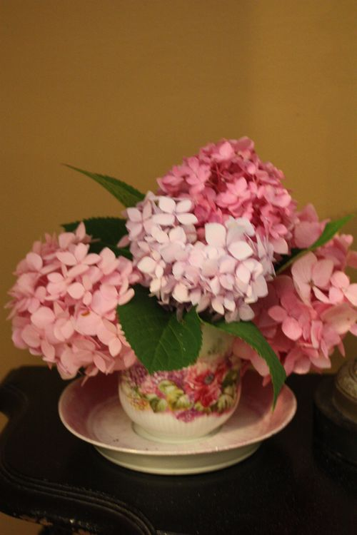 Hydrangeas in Olivia's Great-Great-Great Grandmother's teacup